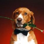 Encuesta de San Valentín acabada