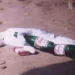 Encuesta de ir muy borracho acabada