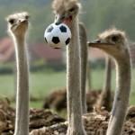 El fútbol y el trabajo: Las comparaciones son odiosas