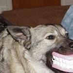 Se unta de mermelada y el perro le muerde el rabo