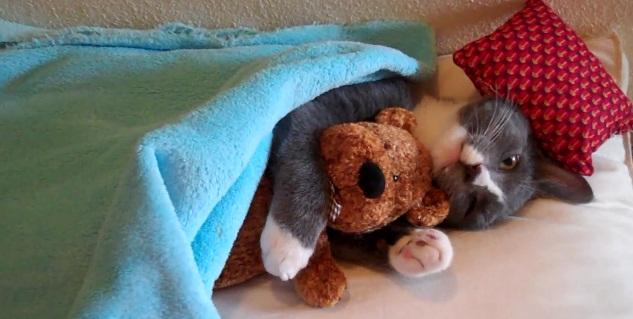 gato peluche despues de consumar