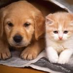 Los perros y los gatos dominan el mundo