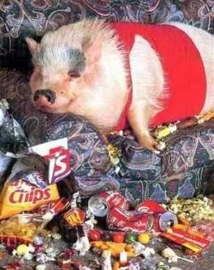 drunk_pig