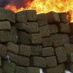 Colocan a un pueblo entero al quemar un alijo de cannabis